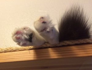 Fluffy cat toes and a tail tip barely visible on a cat shelf.