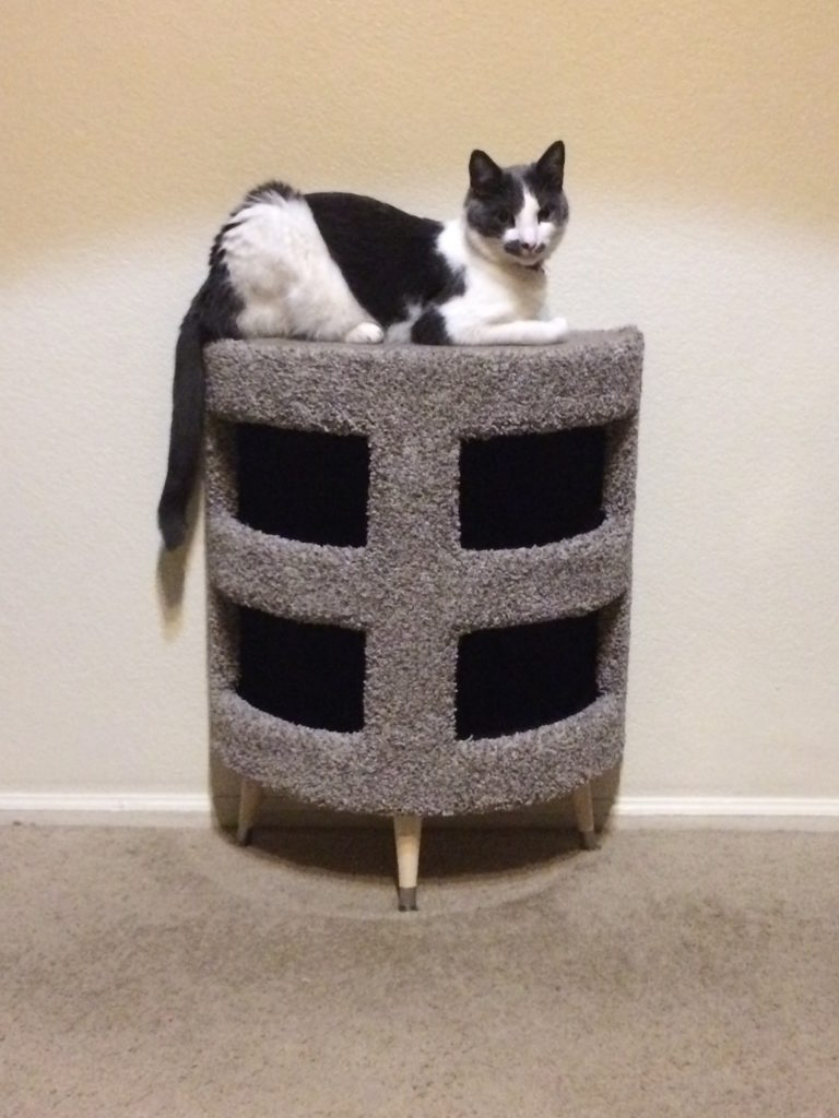 A cat sitting on top of a condo that's a semi-circle against the wall, with two levels.