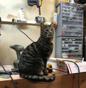 a black and gray tabby sitting on a work bench.