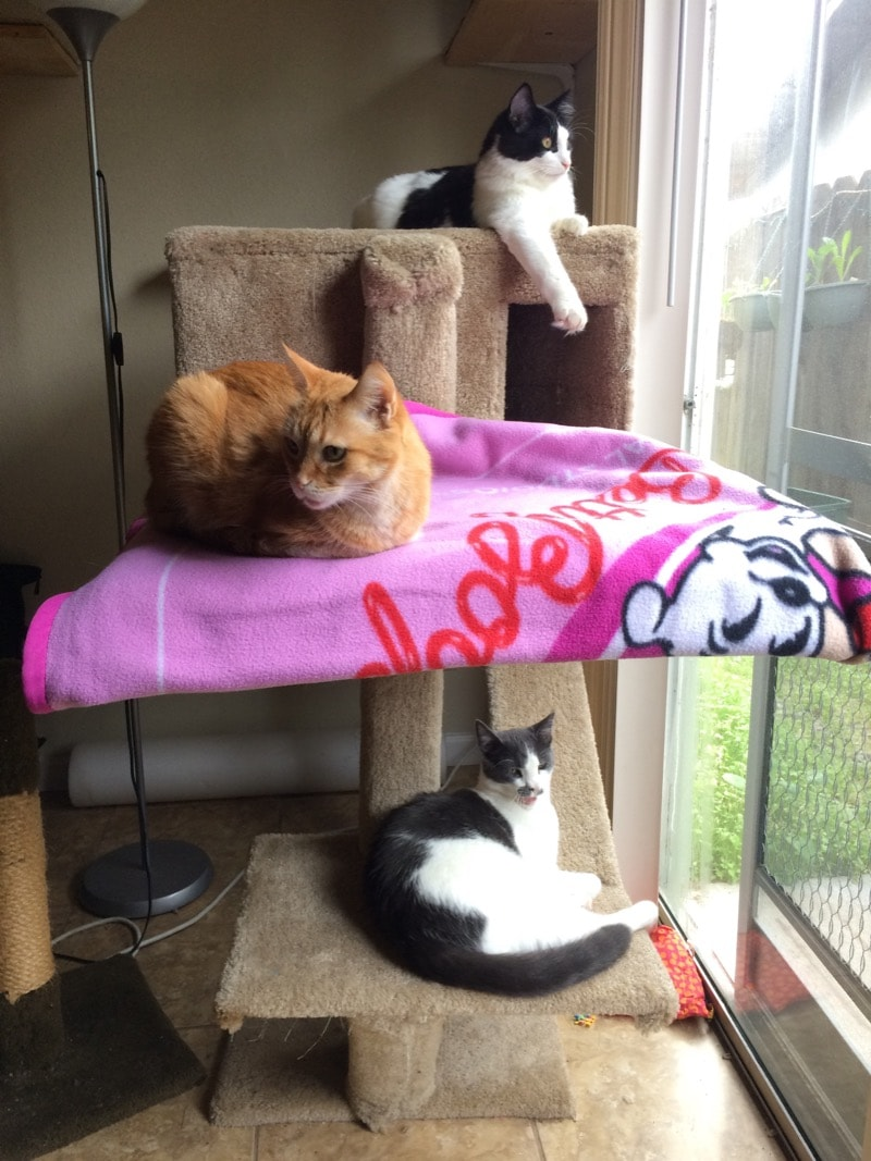 A cat condo with 3 levels, and one cat on each level. The middle level has a pink blanket under a cat.