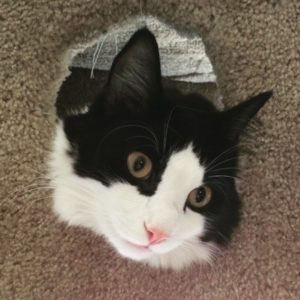 A fluffy black and white cat face sticking out of a condo port hole.