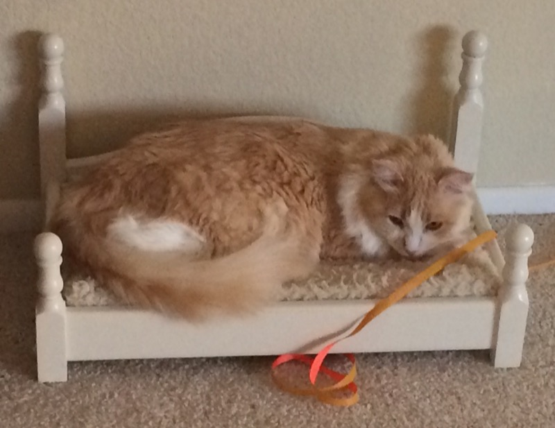 A fluffy cream colored cat laying in a white cat bed.