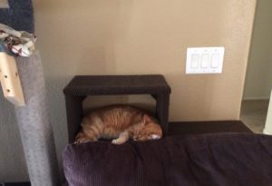 A tabby cat sleeping inside a step mounted to the back of a chair leading up to a cat tube.