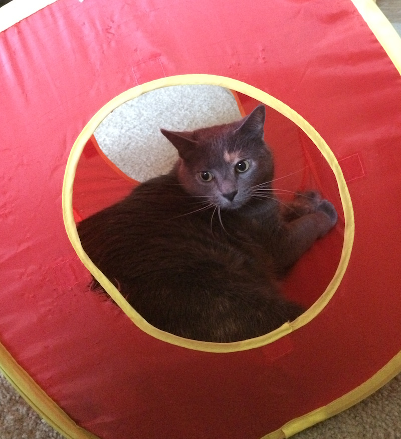 A gray cat sitting inside a fabric cube.