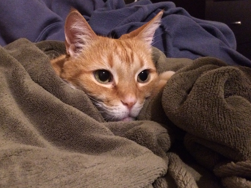an orange cat head sticking out from a green plush blanket