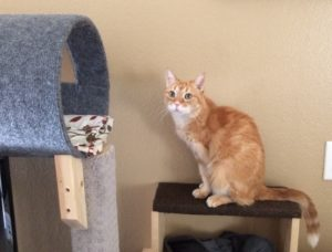 an orange tabby sits on a carpeted step behind a chair, leading up to a cat tube.