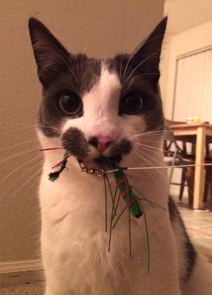A cat is staring at the camera with a toy bug in his mouth.