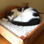 a gray and white cat curled up on a wooden cat bed