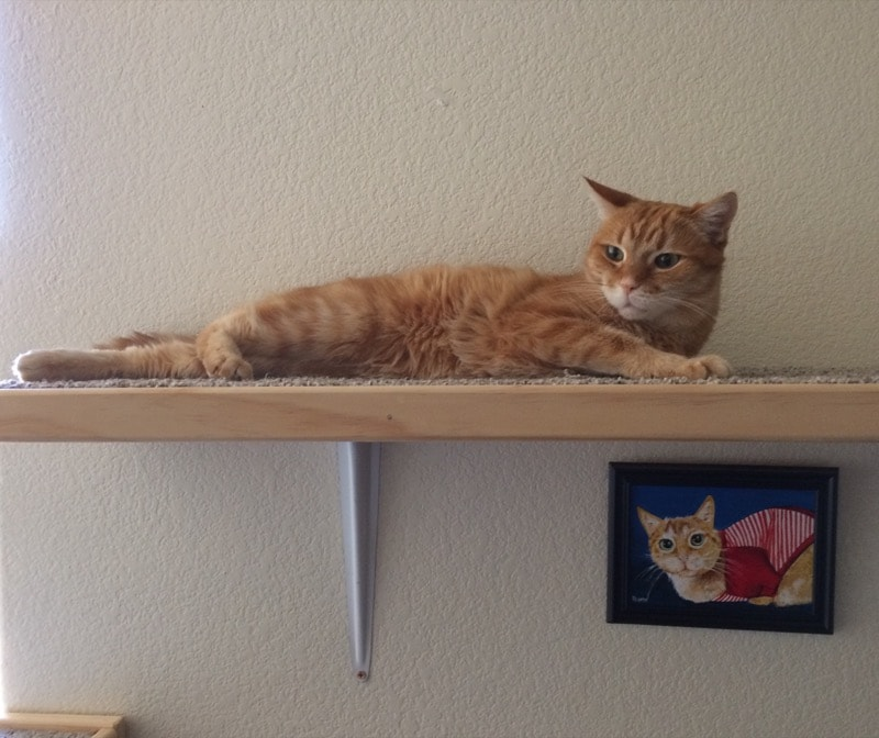 an orange tabby sprawled on a cat shelf, with a painting of the same cat hanging beneath the shelf.