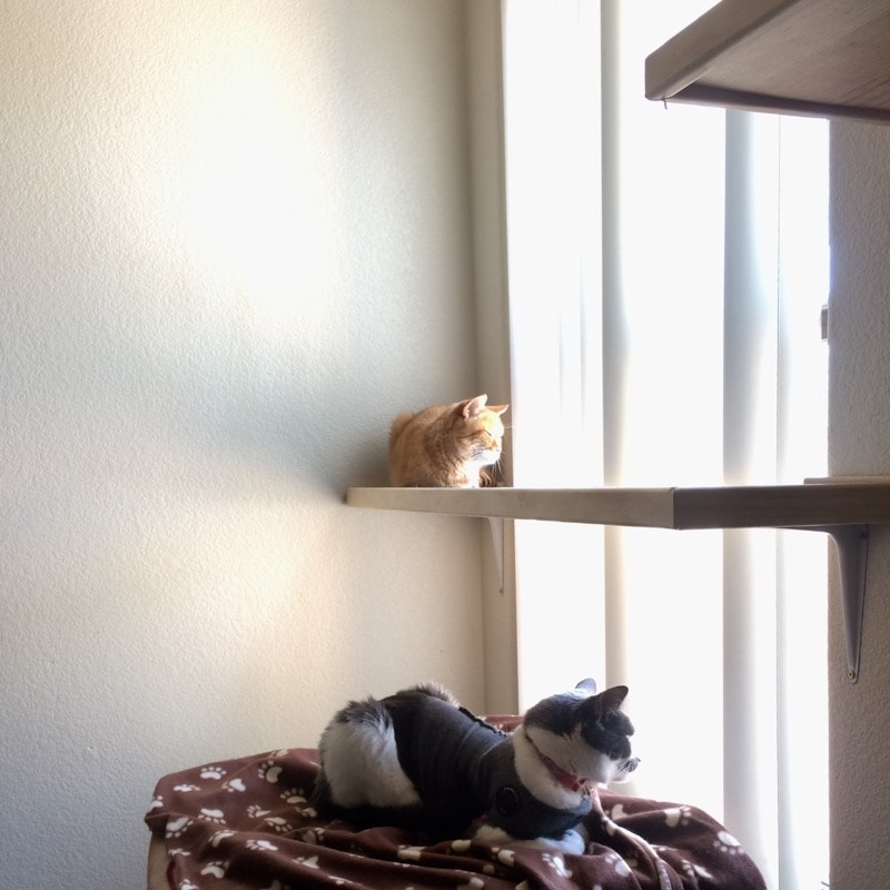 two cats on two cat shelves in a sunny window.